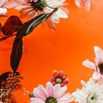iPhone-wallpaper-flowers-nikki-segers-fotografie